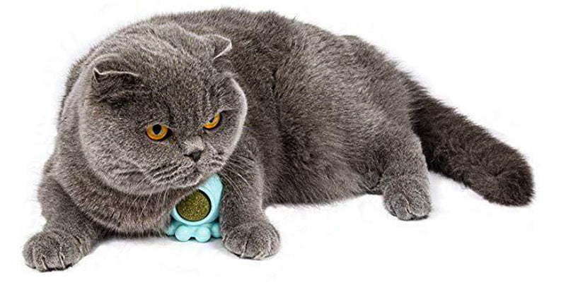 Octopus 360° Rotation Cat Snack Toy