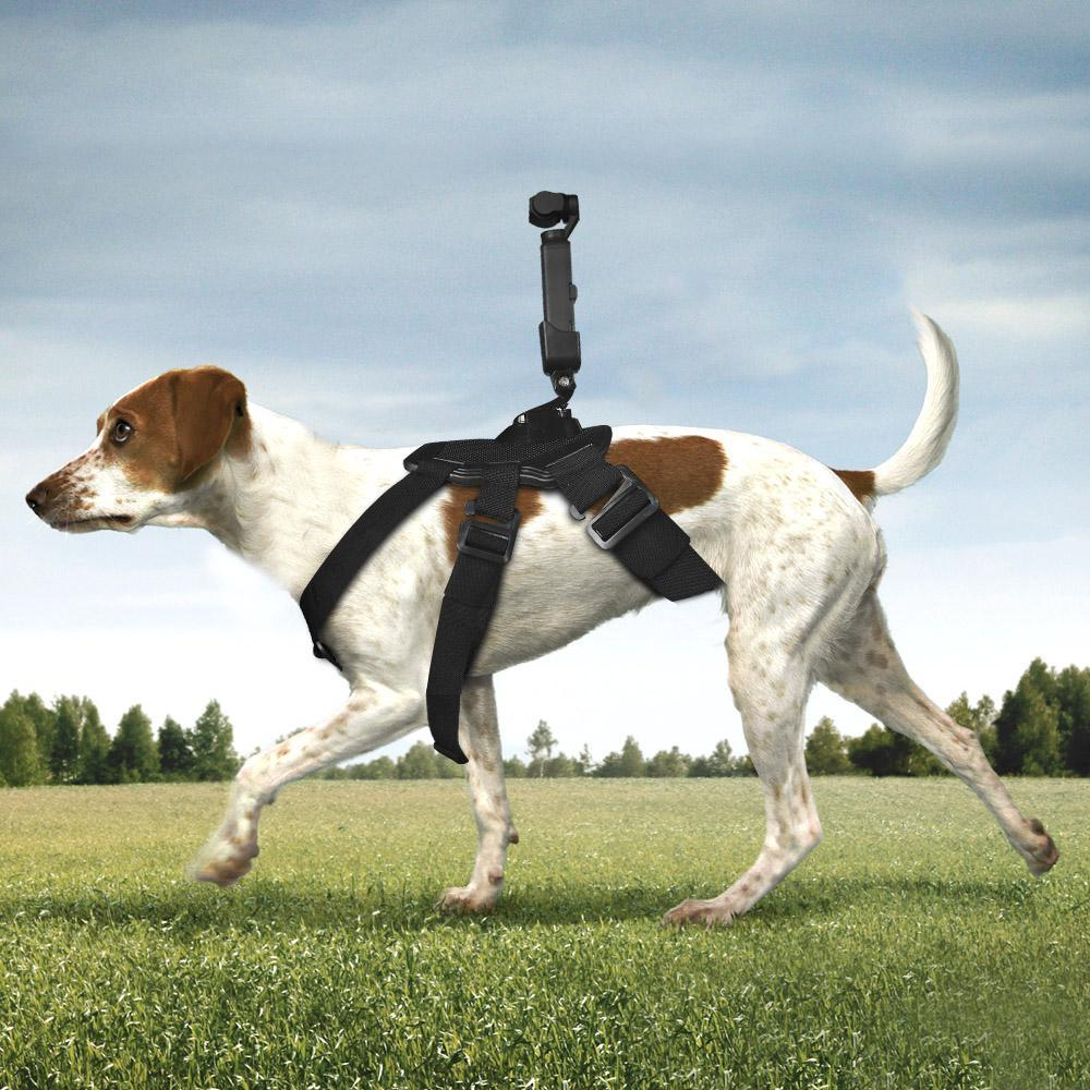 Fetch Dog Harness with Action Camera Mount