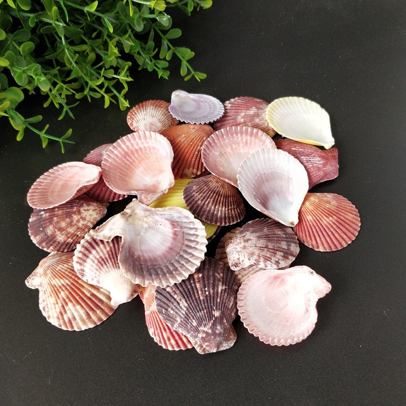30pcs Colorful Natural Scallop Shells