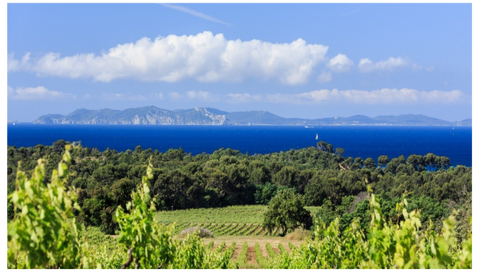 View overlooking the Domaine de la Sangliere Winery with Mediterranean Sea in the background