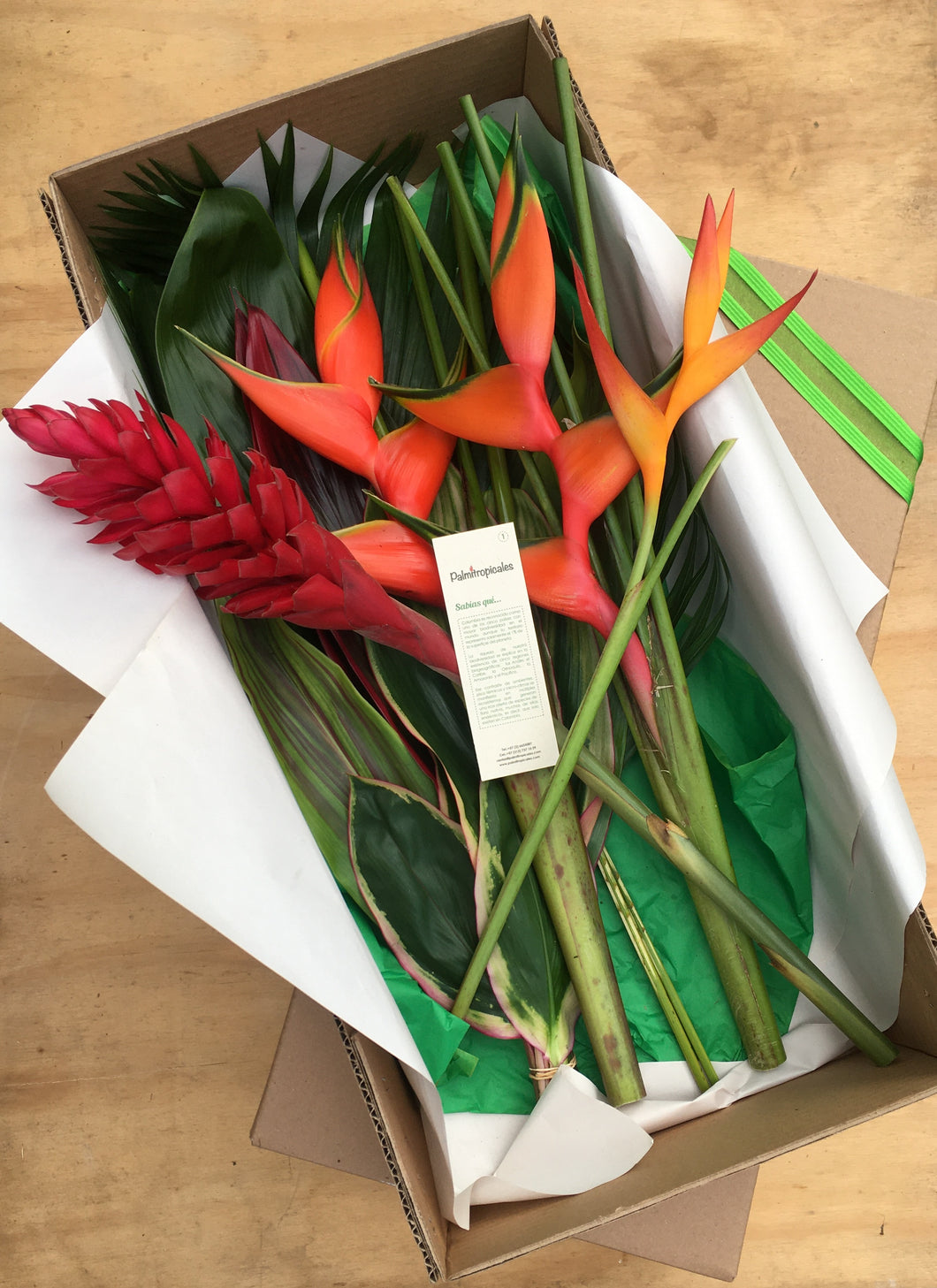 Heliconia Ginger y Opal