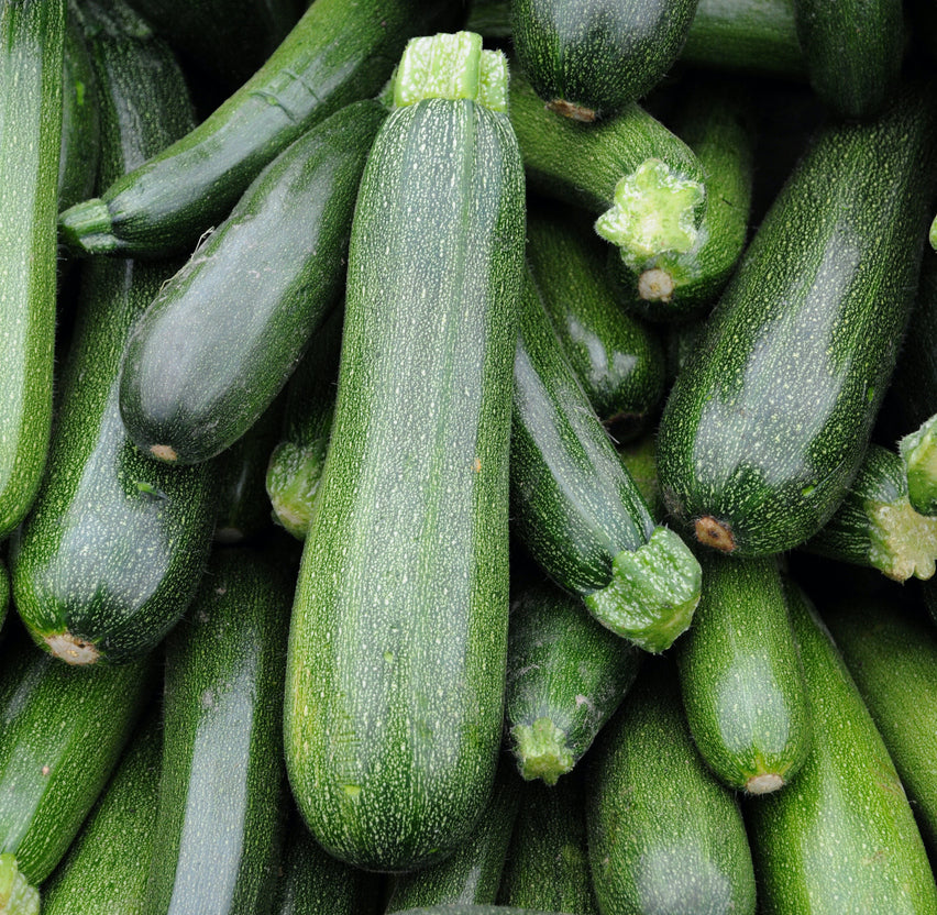 Zucchini Squash, Medium - Each (8-12 oz)