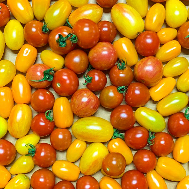 Cherry Tomatoes, Mixed Color - Pint (10-12 oz)