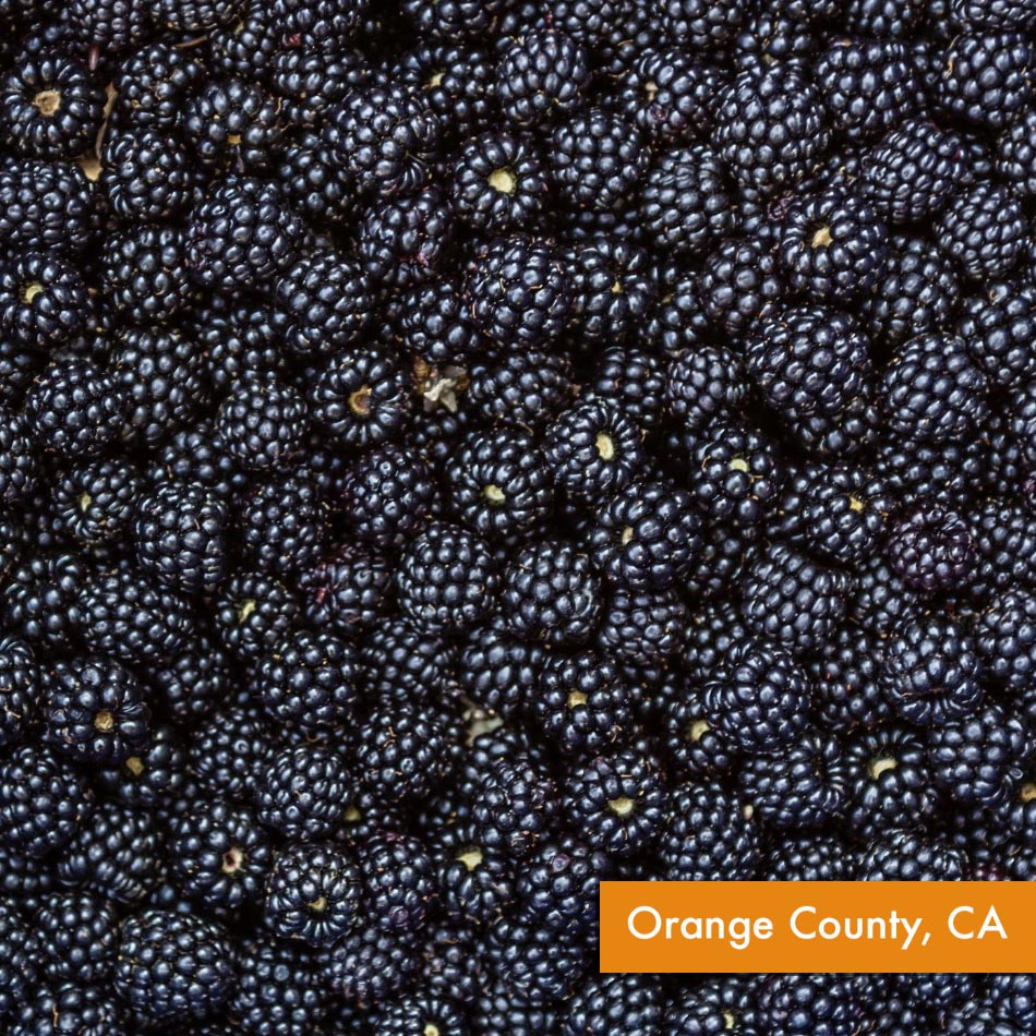 Organic Blackberries (~6 oz)