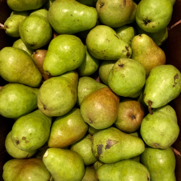 Bartlett Pears, Bunch of 3 (1.0-1.3 lbs)