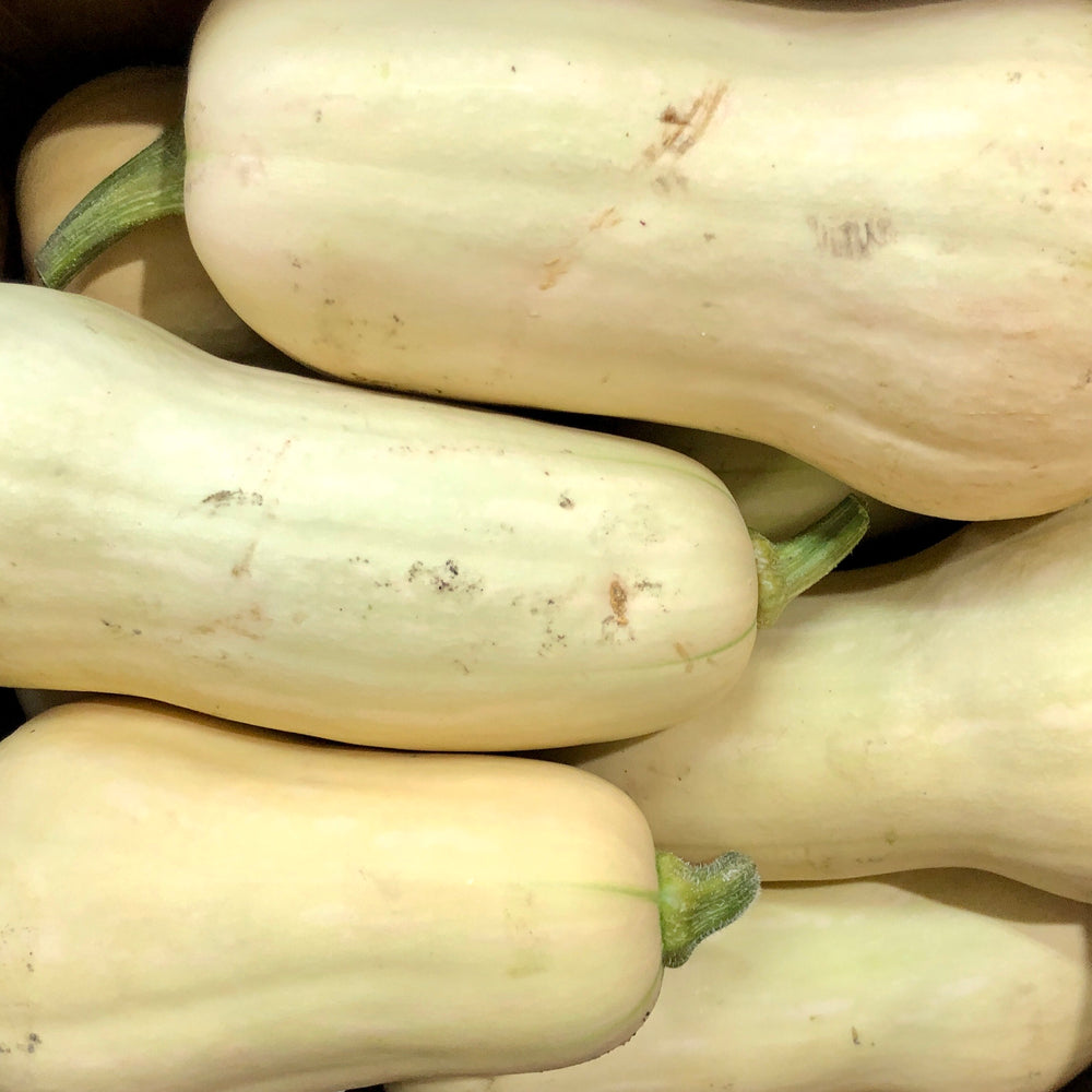 Butternut Squash, Each (Various Sizes)