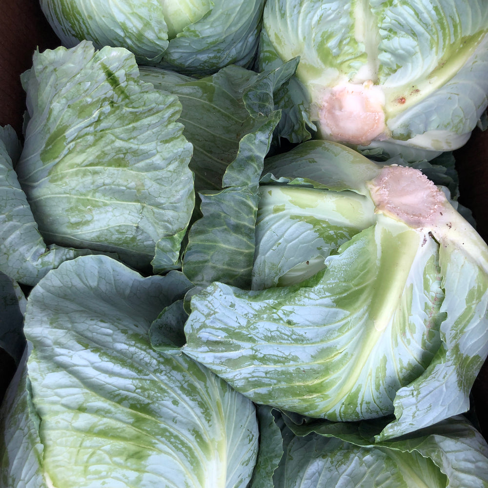 Cabbage, Large (4-5lb)