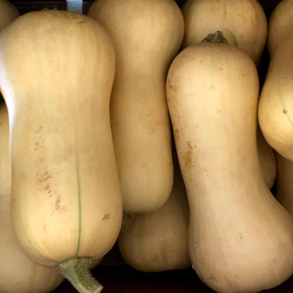 Organic Butternut Squash, Medium (Each)