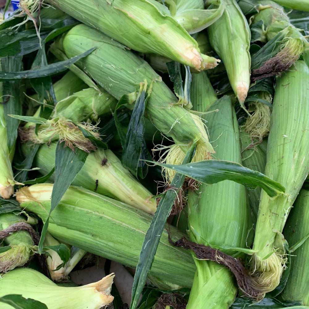 Sweet Corn (Each/Ear)
