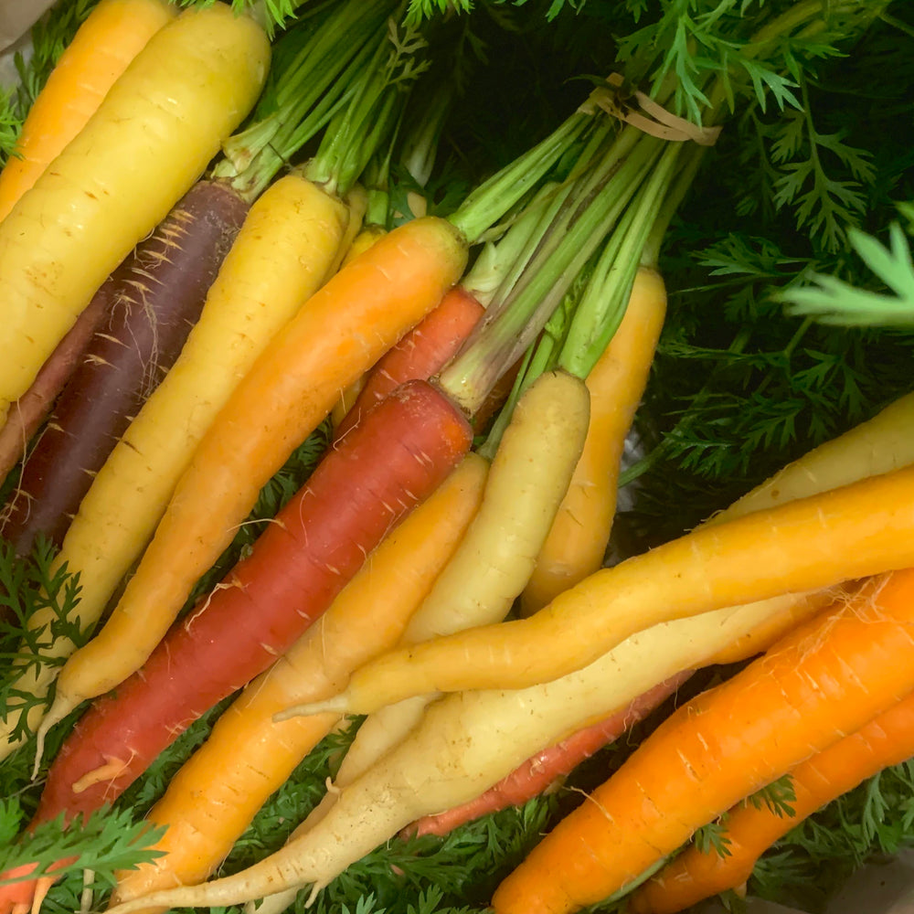 Organic Carrots, Rainbow - Large Bunch (1.0 - 1.5 Pounds)