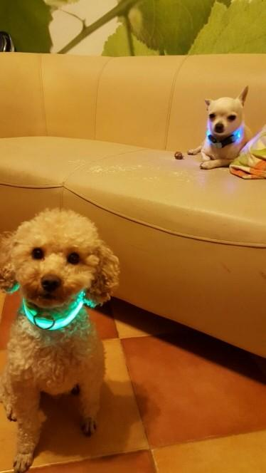 LED Pet Dog Collar wowstore