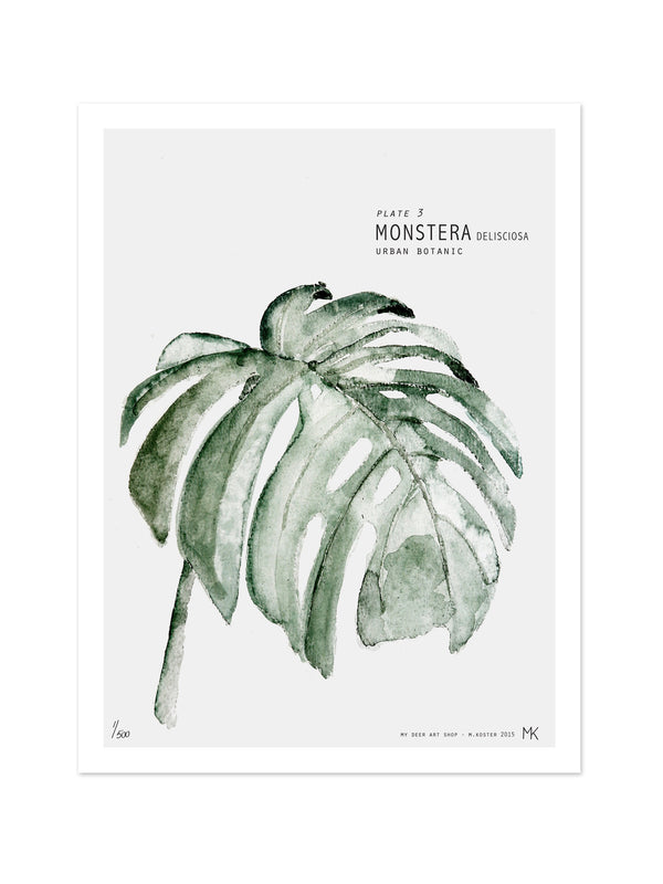 Art - Plate 3 / Monstera 40x50 cm
