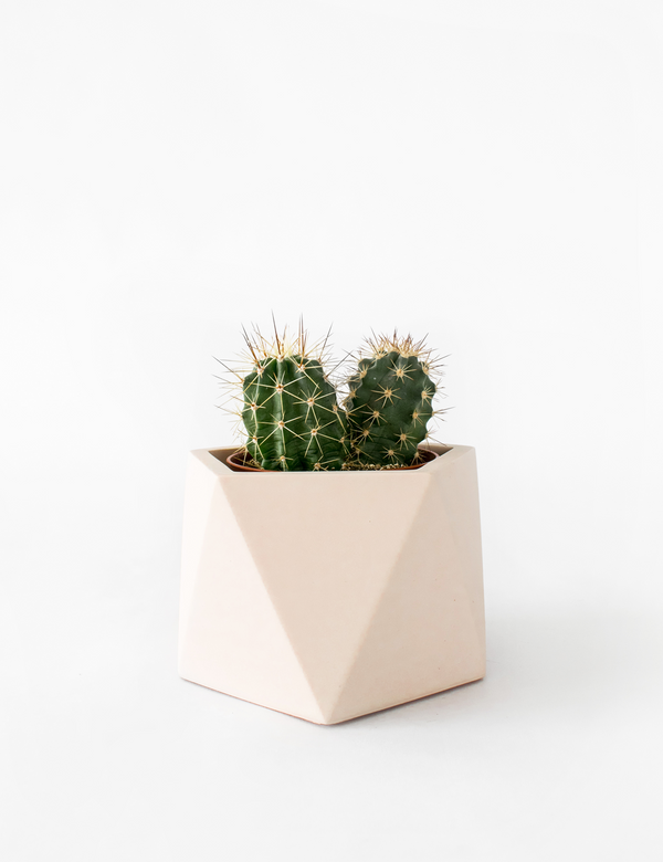 Mare Planter, Tealight Holder Ø 8,5 cm (Millennial Pink)