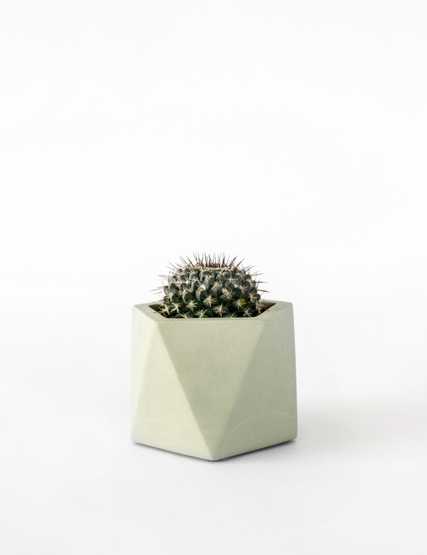 Mare Planter, Tealight Holder Ø 5,5 cm (Olive Green)