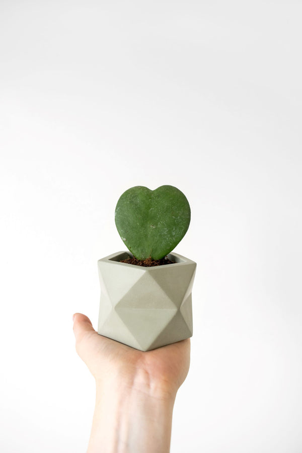 Palua Planter - Medium -  Ø 5,5 cm (Olive Green)