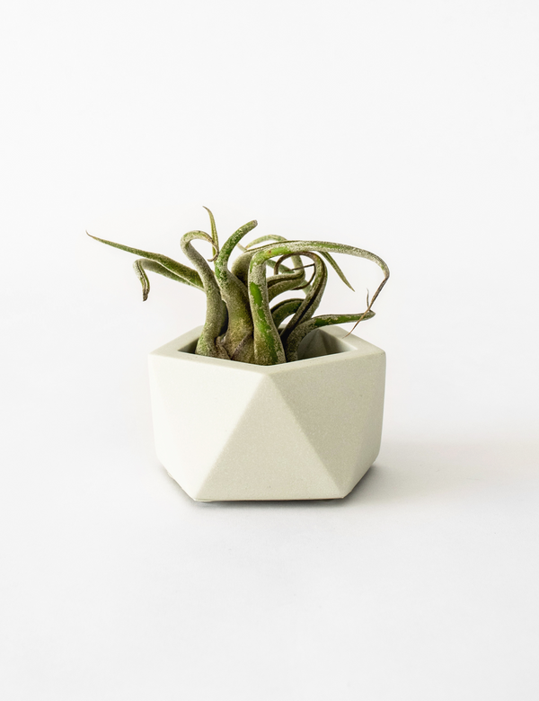 Vand Tealight / Airplant Holder - Silver Green
