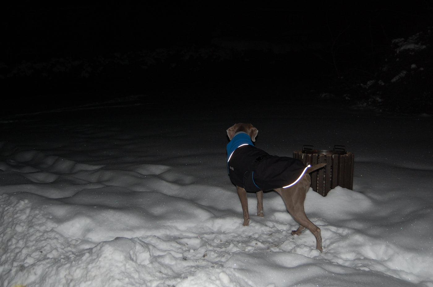 dog coat visible at night