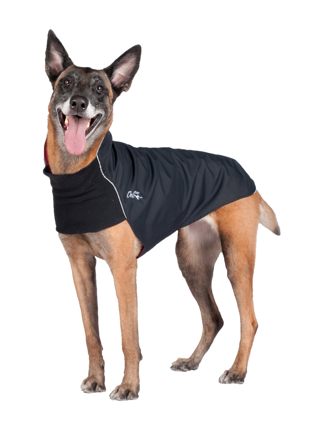 black dog raincoat