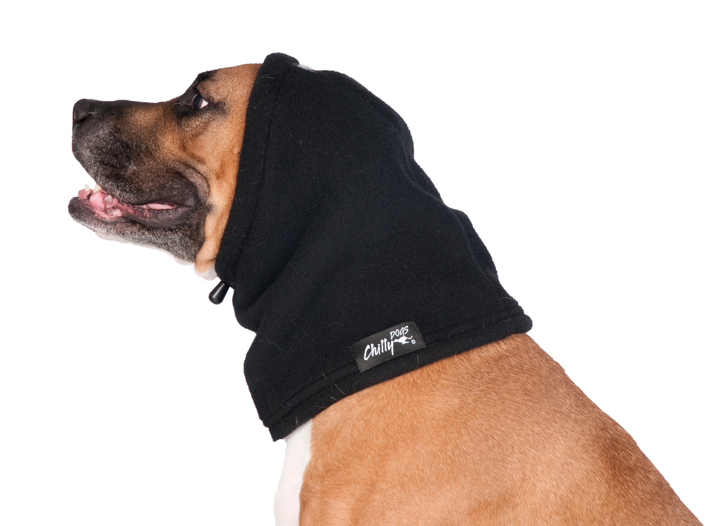 black hat for dogs