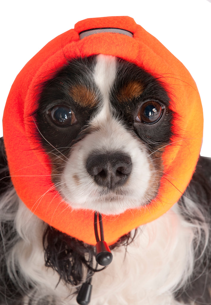 blaze orange dog hats