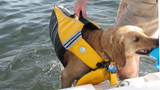 Pet Getting Lifted Onto Boat with Safety Handle on Dog Life Jacket