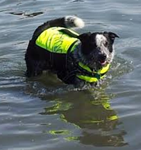 Pet Wearing Hurtta Dog Life Jacket in Water