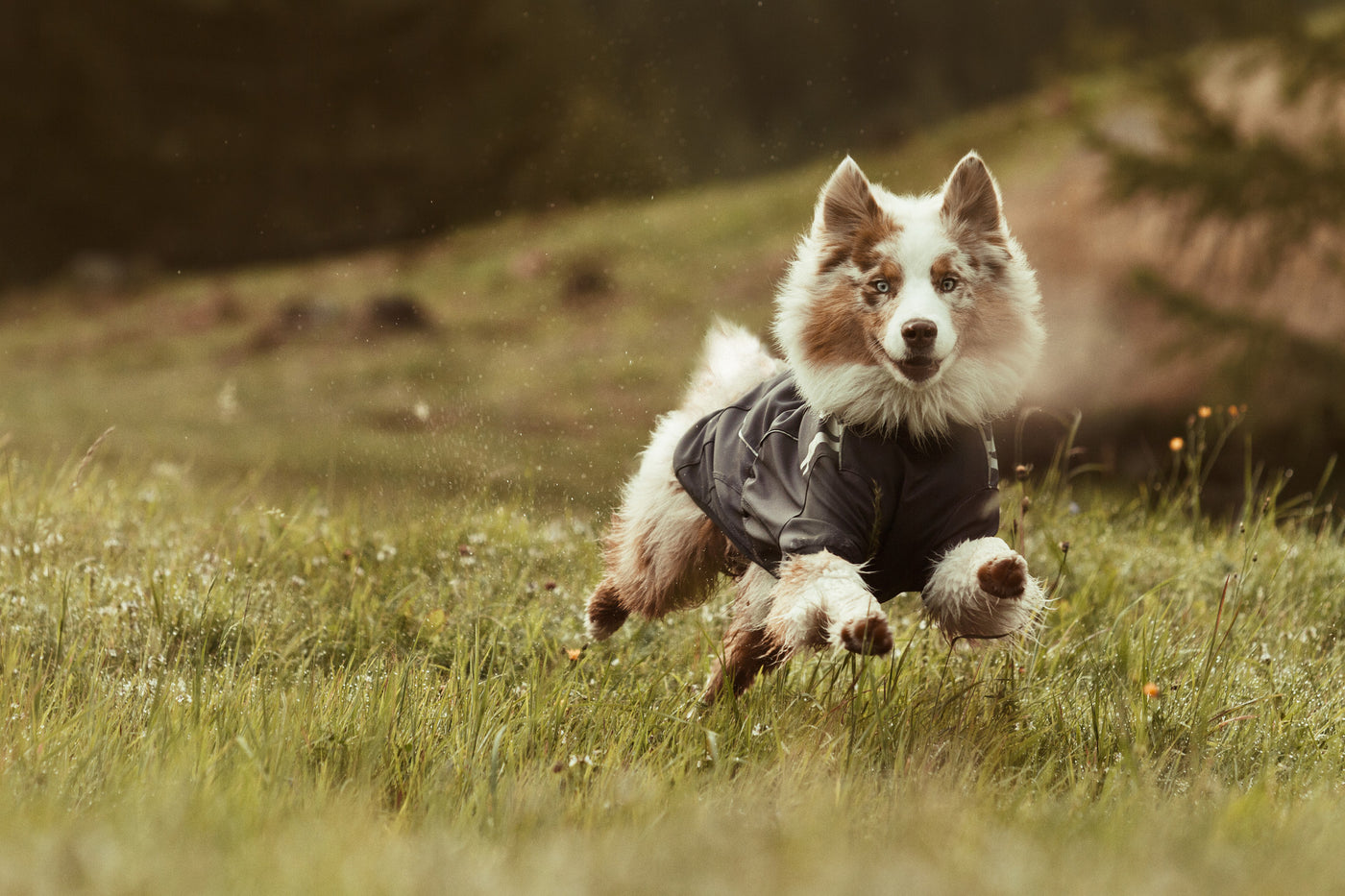 Hurtta Frost Dog Jacket for Active Dogs in Winter