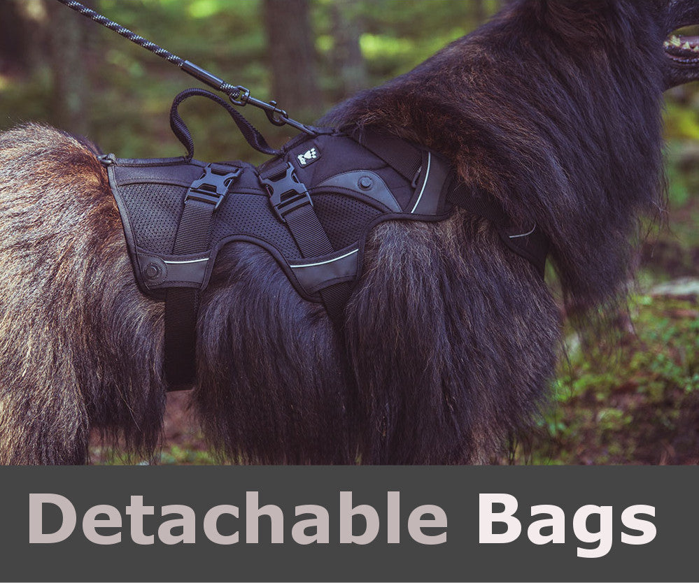 Detachable Packs for Harness Use