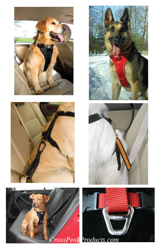 Vehicle Use of Kurgo Tru-Fit Dog Harness & Seat Belt for Traveling