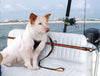 Dog Using Kurgo Safety Harness and Zip Line While Boating