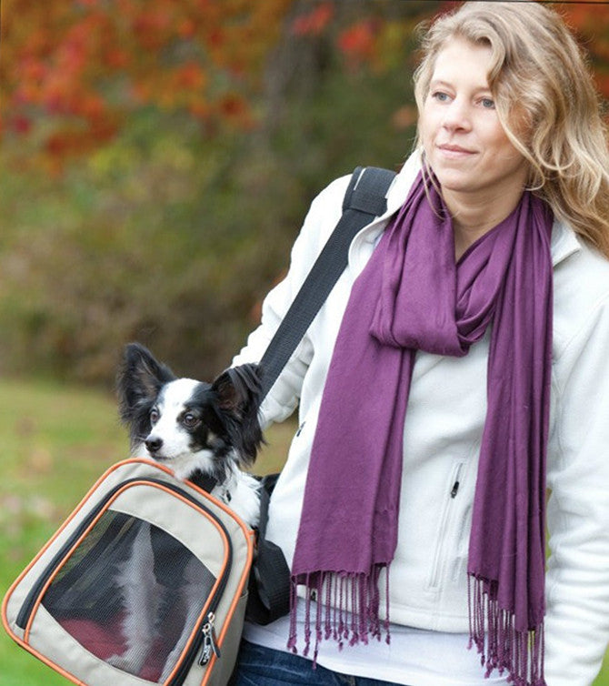 Papillon Traveling in Dog Carrier