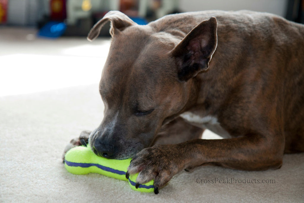Kong Air Squeaker Bone Dog Toy for Playing Fetch