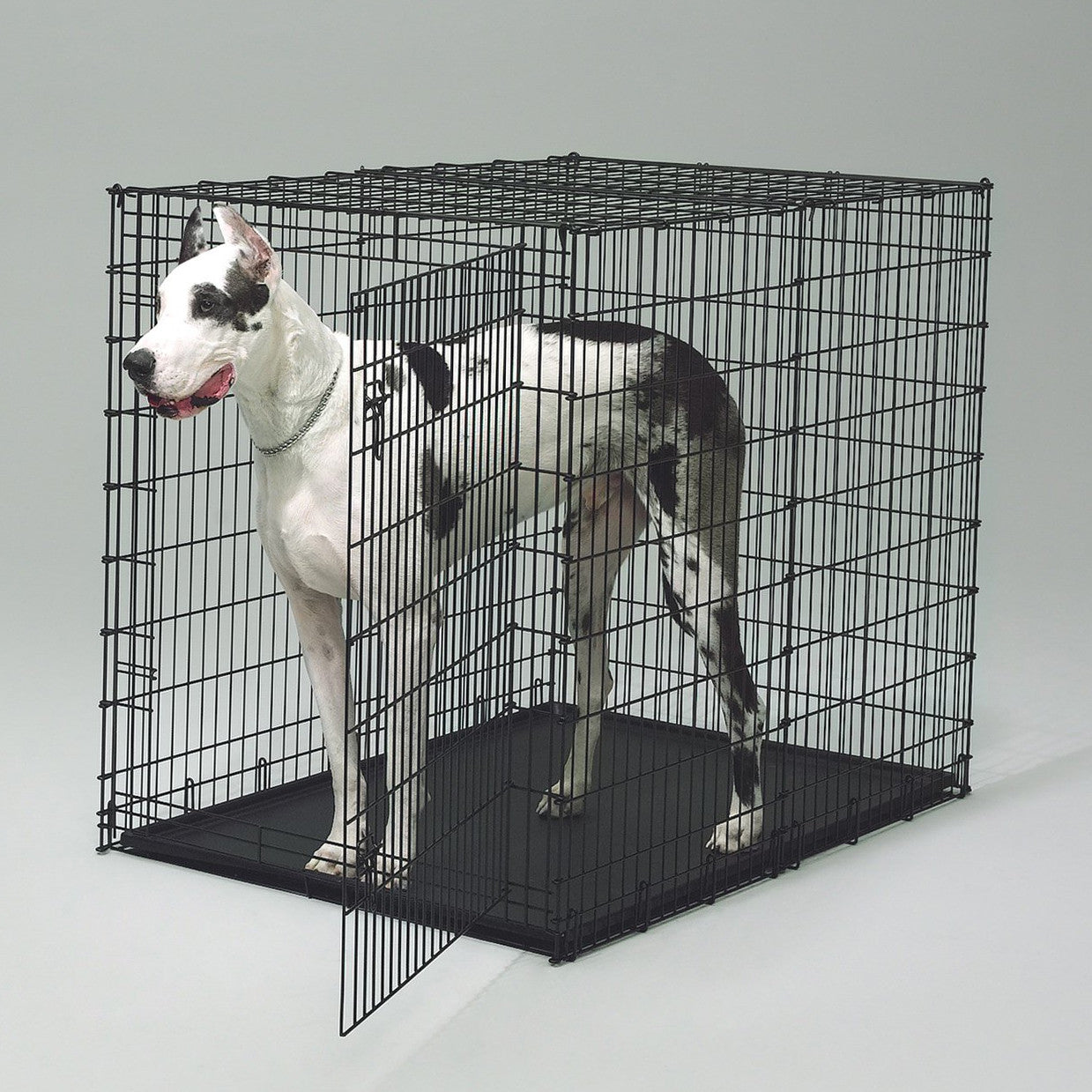 Midwest 1154U Extra Large Dog Crate for Big Dogs