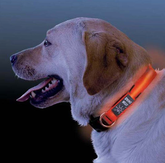 Pet Wearing Niteize NiteDawg LED Dog Collar for Night Safety