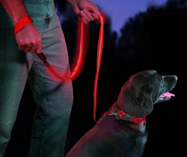 Pet Wearing Niteize NiteDawg Dog Leash for Night Safety