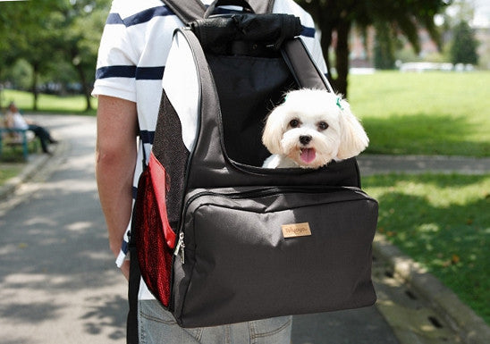 Dog in PetZip Dainty Backpack Pet Carrier for Hiking or Walking
