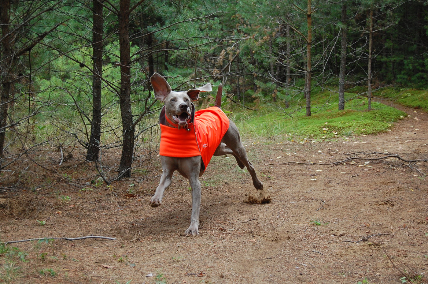 safety blaze orange rain coat for dogs