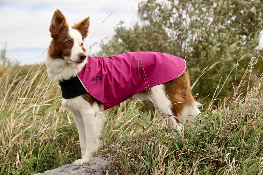raspberry rain jacket for dogs