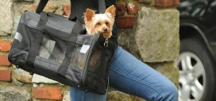 Yorkie Traveling in Sherpa Deluxe Airline Approved Dog Carrier