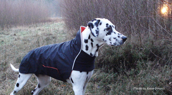 Chilly Dogs Trail Blazer Dog Coat