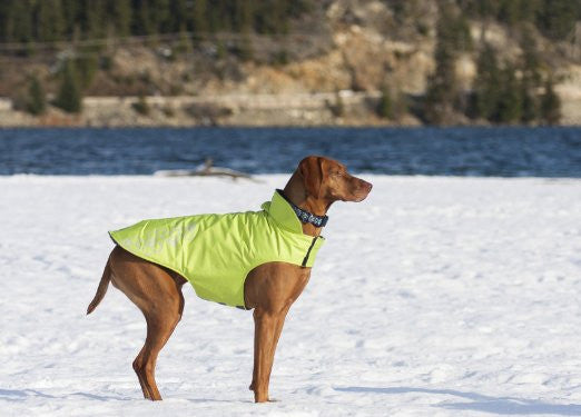 RC Pet Products Venture Outerwear Fleece Lined Winter Dog Coat for Cool Weather in Lime Punch