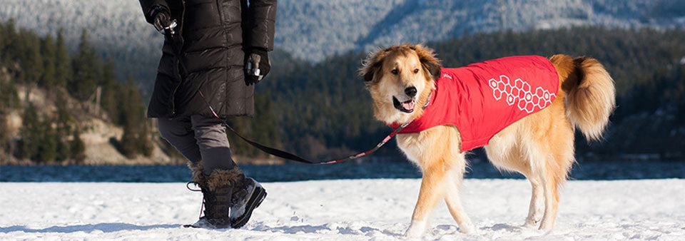 RC Pet Products Venture Outerwear Dog Winter Coat