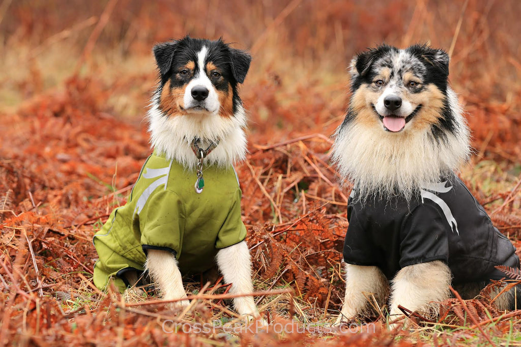 Australian Shepherds in Hurtta Frost Jacket