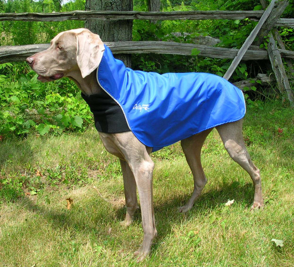Chilly Dogs Rain Slicker