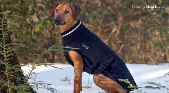 Chilly Dogs Fleece Sweater in Black