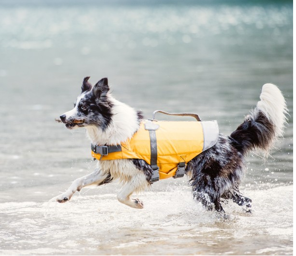 life-floatation-device-for-dogs