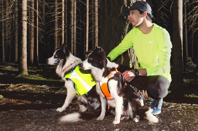 hurtta polar dog visibility vest