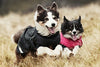 hurtta summit parka winter dog coat