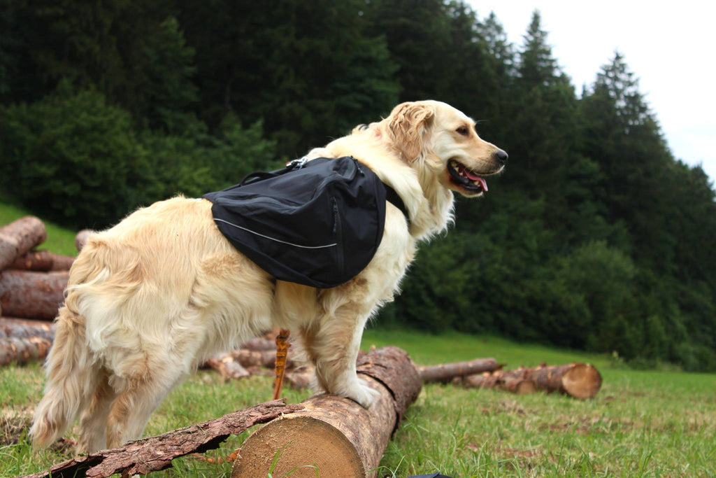 Hurtta Trail Pack on Golden Retriever size Medium