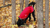 Chilly Dogs Rain Jacket in Red